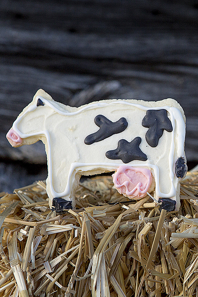 Summer time is fun time with sugar cookies shaped like cute farm animals! The classic sugar cookie never goes out of style