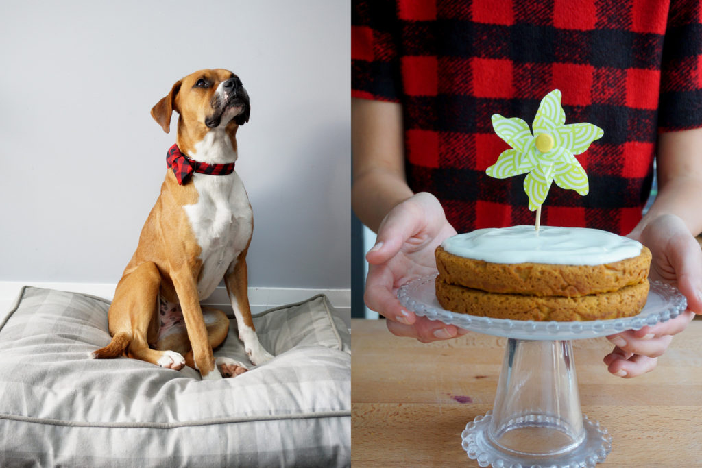 Homemade dog cake & a bow tie collar giveaway